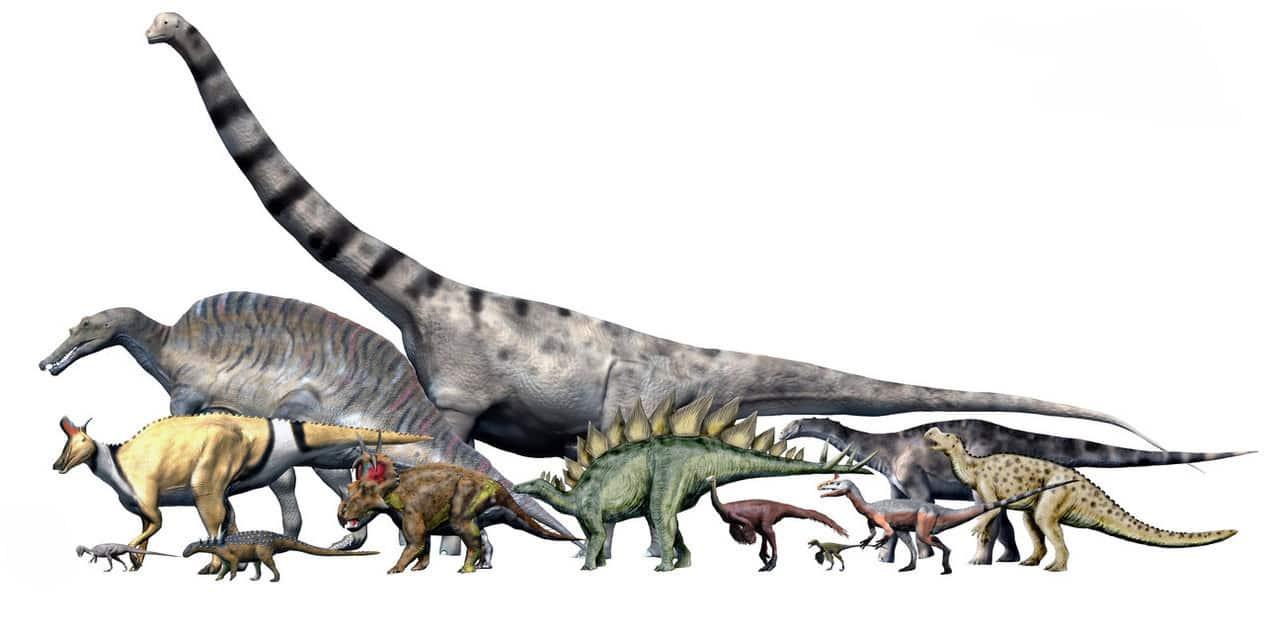 انقراض الديناصورات سمح للضفادع بغزو الأرض