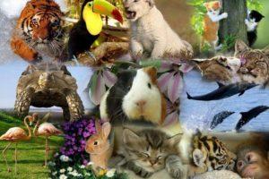 التكاثر عند الحيوانات الولودة