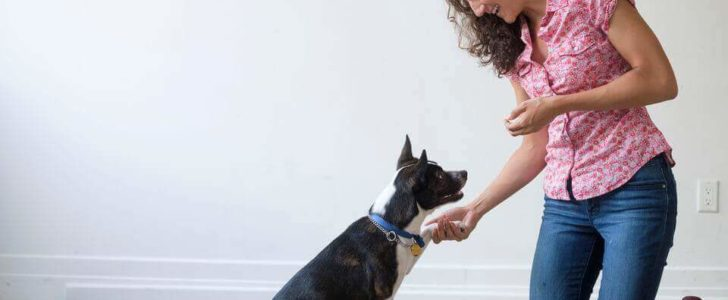 تدريب الكلاب على الطاعة