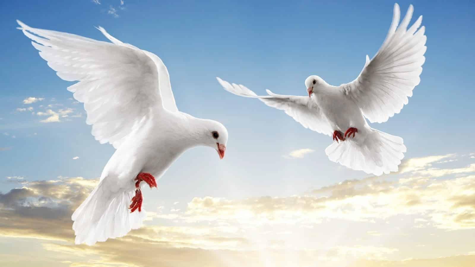 كيف تطير الطيور
