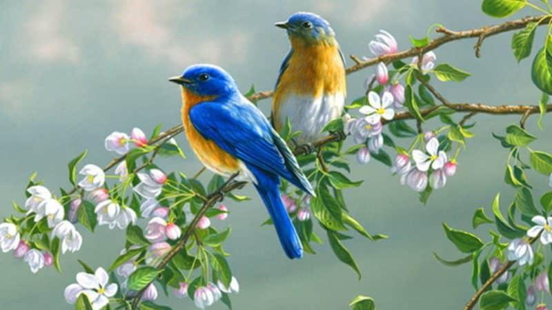 لمربى طيور الزينة أفضل أنواع طيور الزينة وألوانها وأفضل غذاء لها نافذة الزراعة