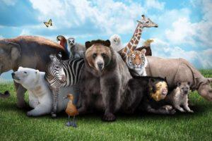 صور حيوانات جميلة وطريفة في الغابة