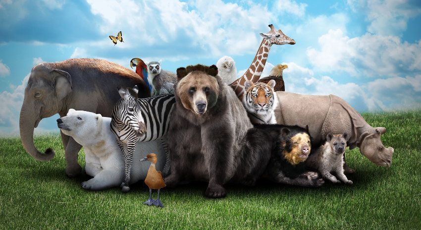 صور حيوانات