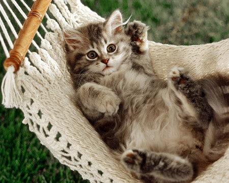 اجمل القطط