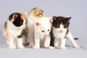 صور قطط جميلة لاجمل القطط في العالم