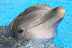 صوت الدلفين وماذا يسمى