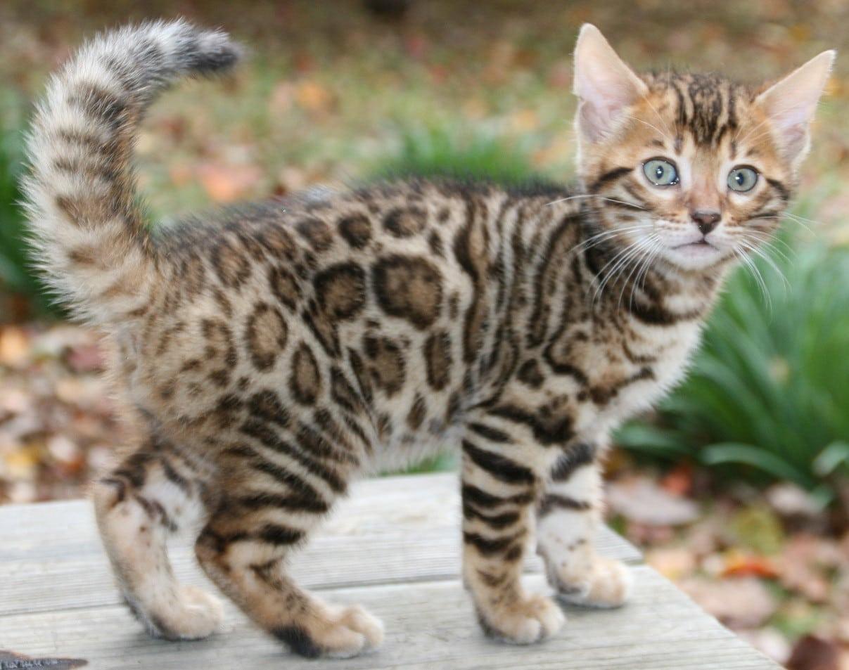 صور قطط ملونة