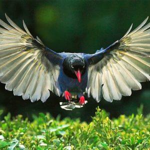 صور طيور لأجمل الطيور في العالم