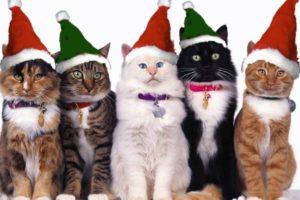 أنواع القطط بالاسماء