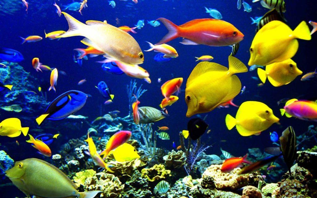انواع السمك