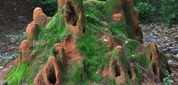 بيت النمل ومن ماذا يتكون