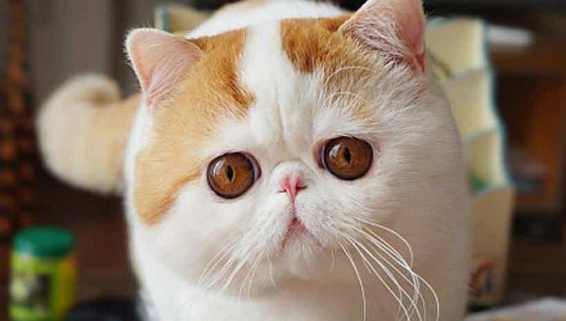 قطط حزينة