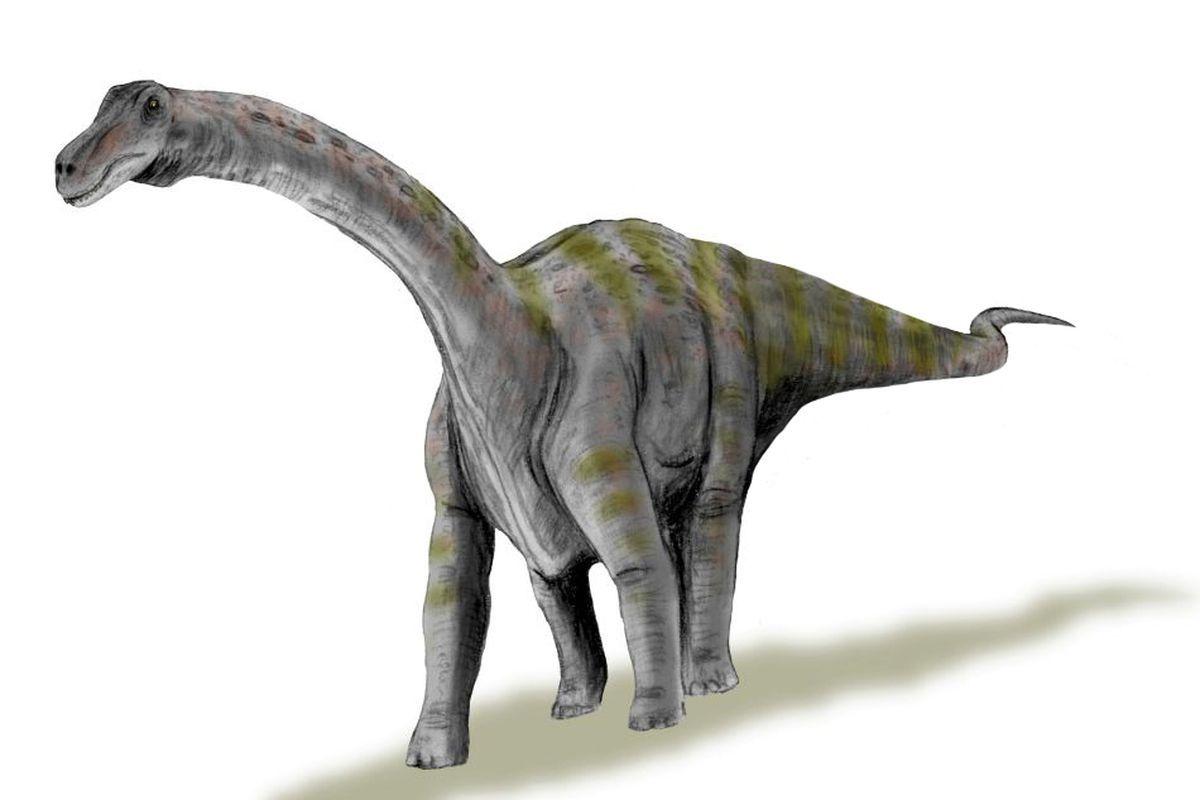 الديناصور أباتوصور