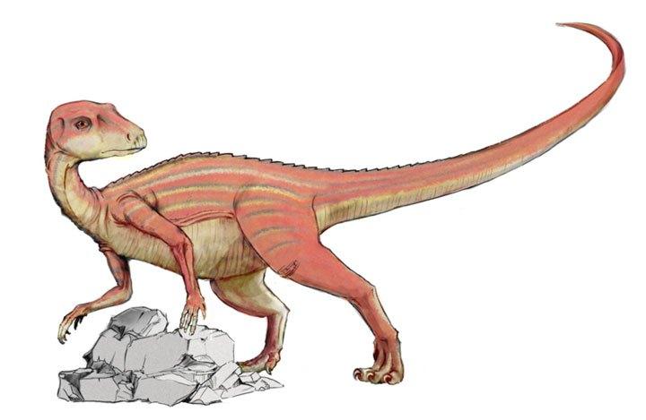 أبريكتوصور
