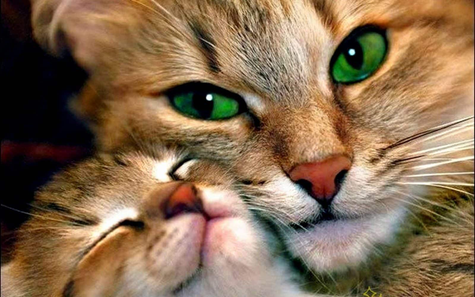 صور قطط رائعة