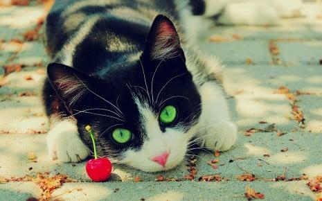 صور قطط لطيفه