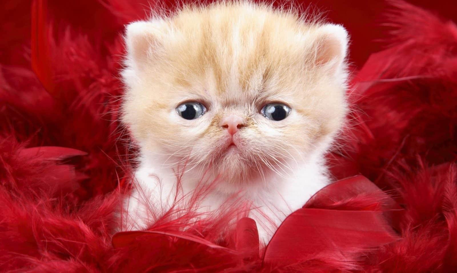 صور قطط حزينه