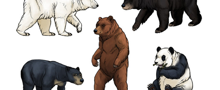 معلومات عن أنواع و أسماء الدببة