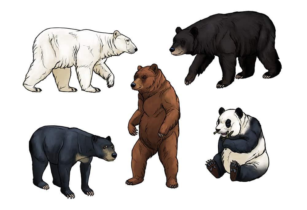 أنواع الدببة