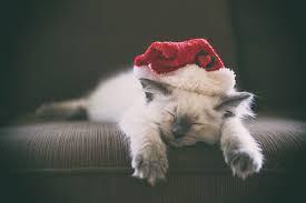 قطط جميلة لطيفة