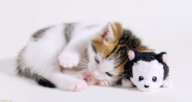 اجمل الصور للقطط