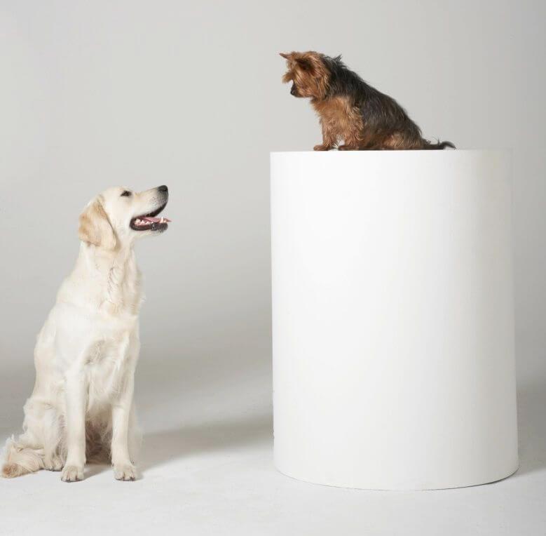 انواع الكلاب