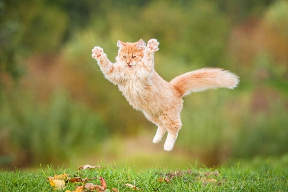 صور قطط فرحة