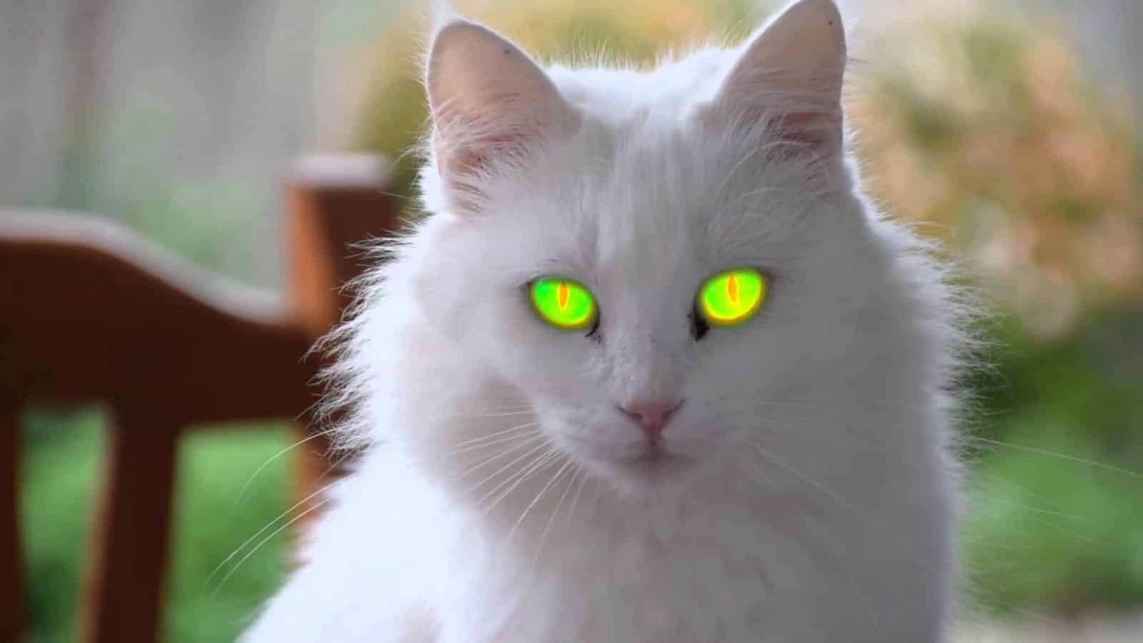 صورة اجمل صور قطط , صور قطط كيوت جدا