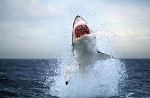 أنواع أسماك القرش