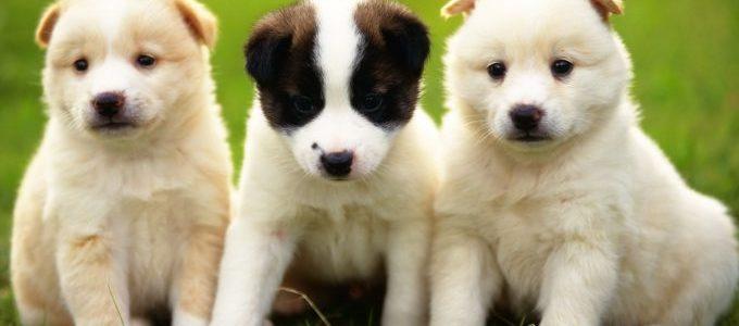 موضوع عن الكلاب