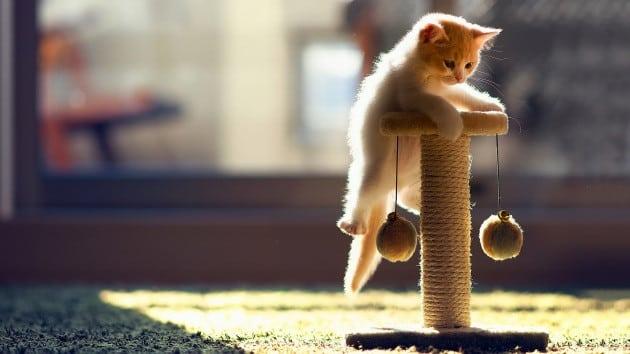 قطط جميلة