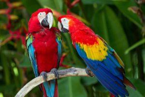 أنواع طيور الببغاء الاكثر شهرة