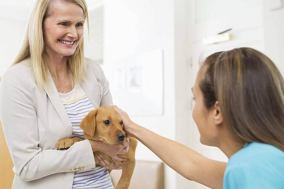 كيفية إضافة الطابع الاجتماعي على الكلاب