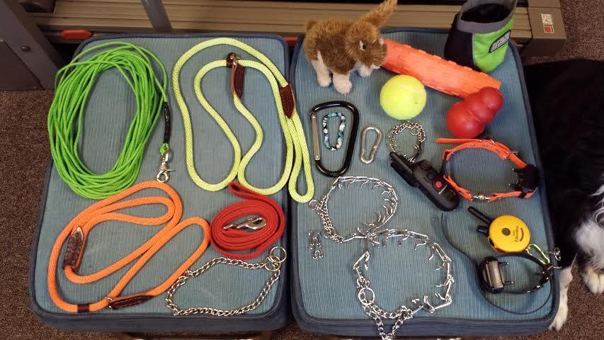أدوات لتدريب الكلاب