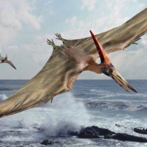 الديناصور تيروداكتيل