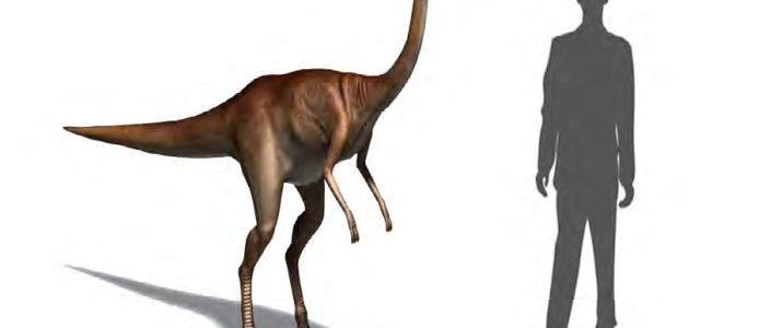 ديناصور شبيه النعامة