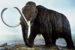 حيوان منقرض يشبه الفيل