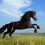 معلومات عن الحصان