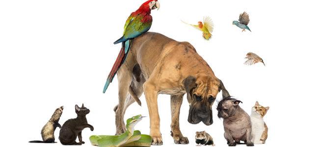 أنواع الحيوانات الأليفة