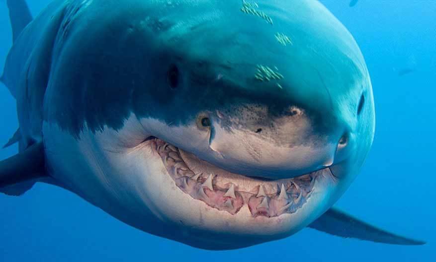 عالم اسماك القرش