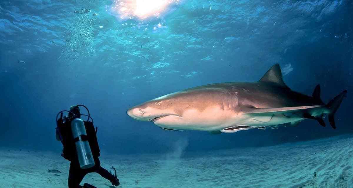 صور القرش