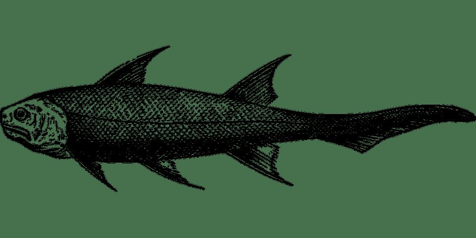 اسماك منقرضة