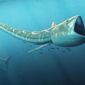 أنواع الأسماك البدائية