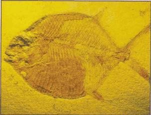 أنواع الاسماك