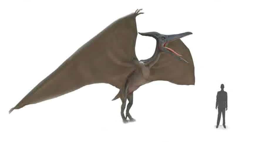 ديناصور تيروداكتيل