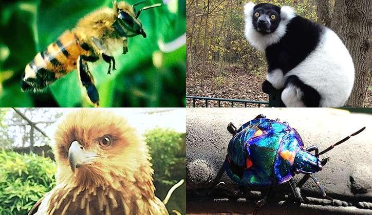 أنواع الحيوانات