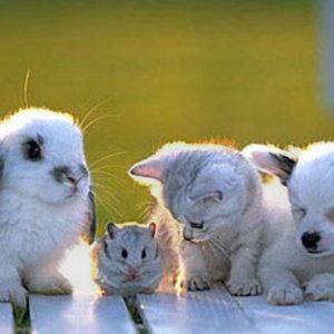 أسماء صغار الحيوانات