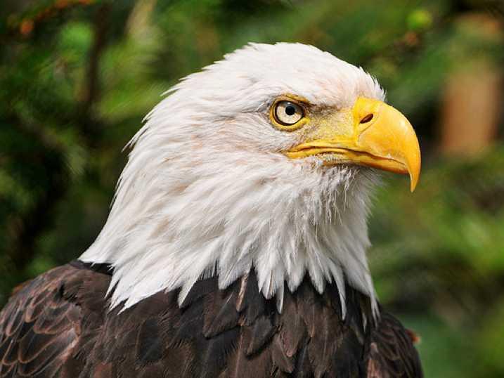 انواع طيور العقاب