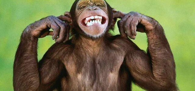 صوت القرد