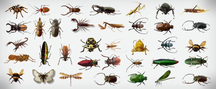 صور حشرات جميلة